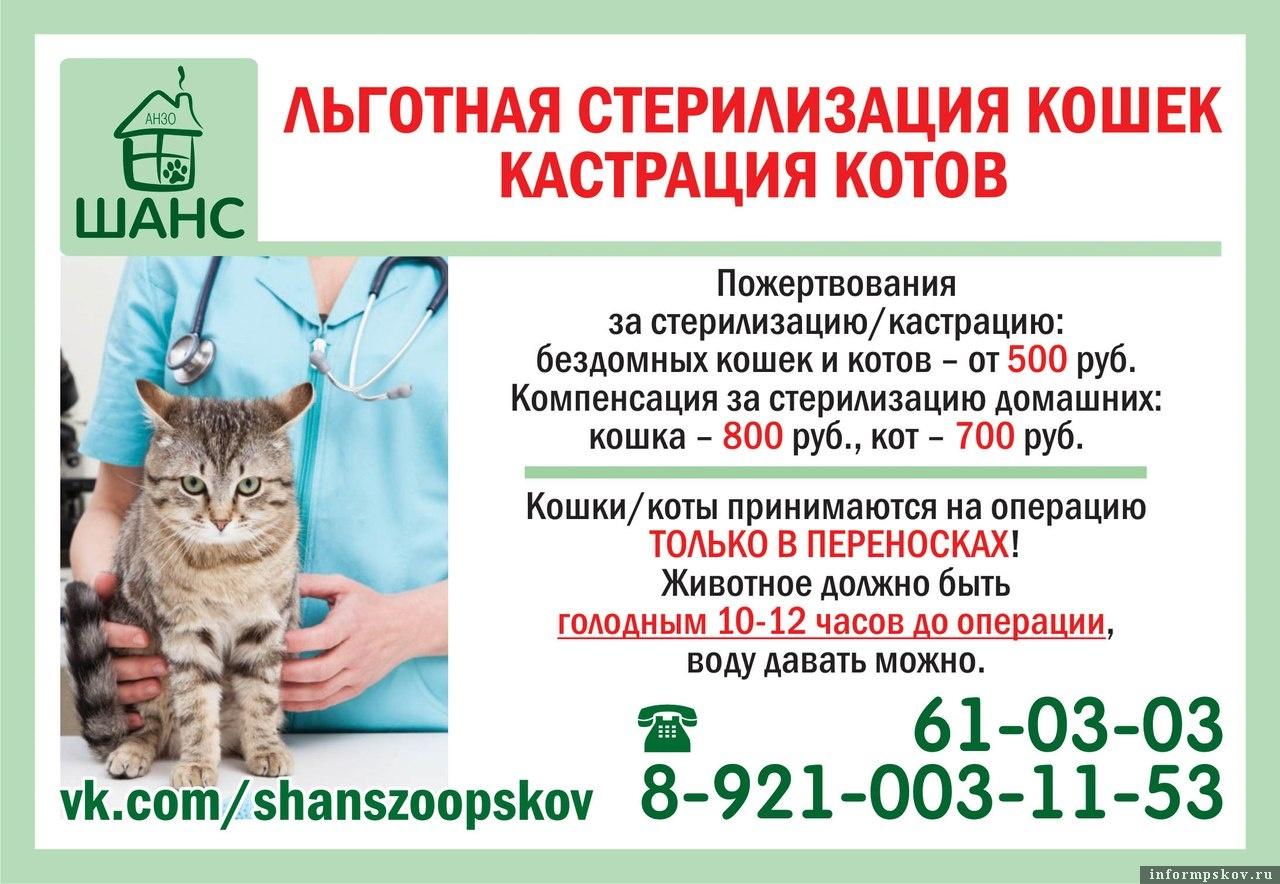 стерилизация при коронавирусе кошек