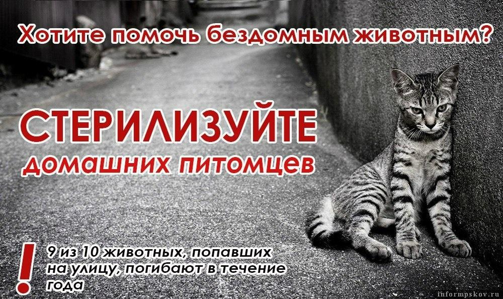 коронавирус у кошек запор
