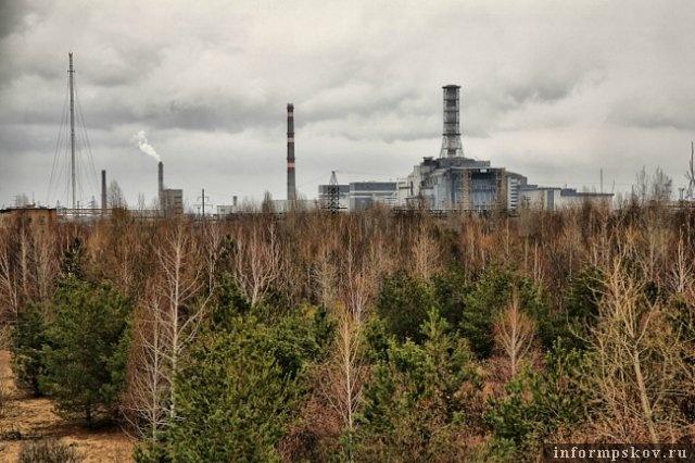 Рыжий лес в Чернобыле (фото с сайта people-of-chernobyl.ru)