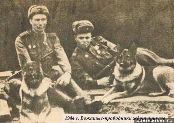 Справа овчарка Дина с А. Филатовым. Фото с сайта bestlj.ru