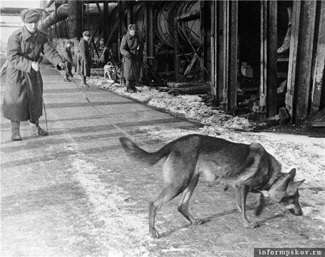 Собака-миноискатель Дик. Фото с сайта zt116.ru