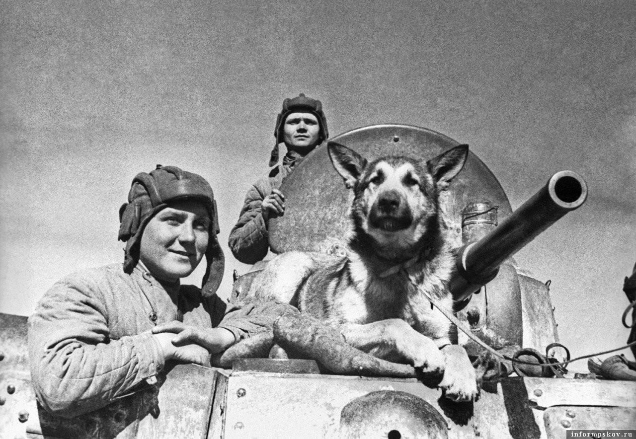 Экипаж советского бронеавтомобиля БА-10: старший сержант Е. П. Эндрексон, сержант В. П. Поршаков, Т. Д. Деренко и овчарка Джульбарс. Южный фронт. Фото с сайта polzam.ru