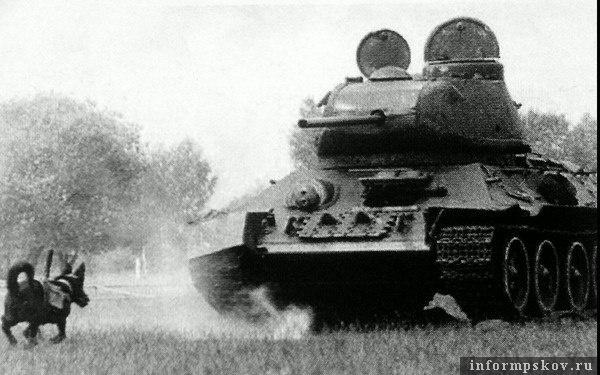 Собака - истребитель танков. Фото с сайта 900igr.net