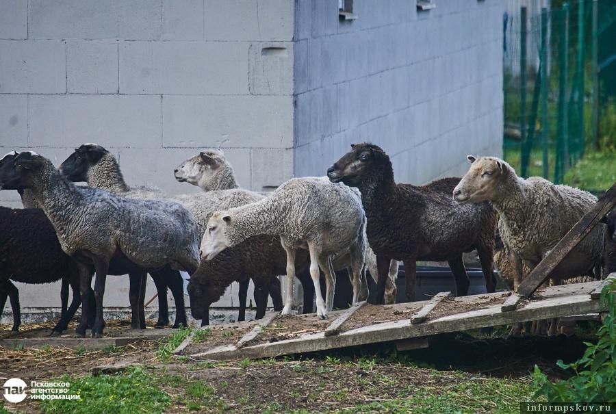 На фото: Обитатели местной экофермы