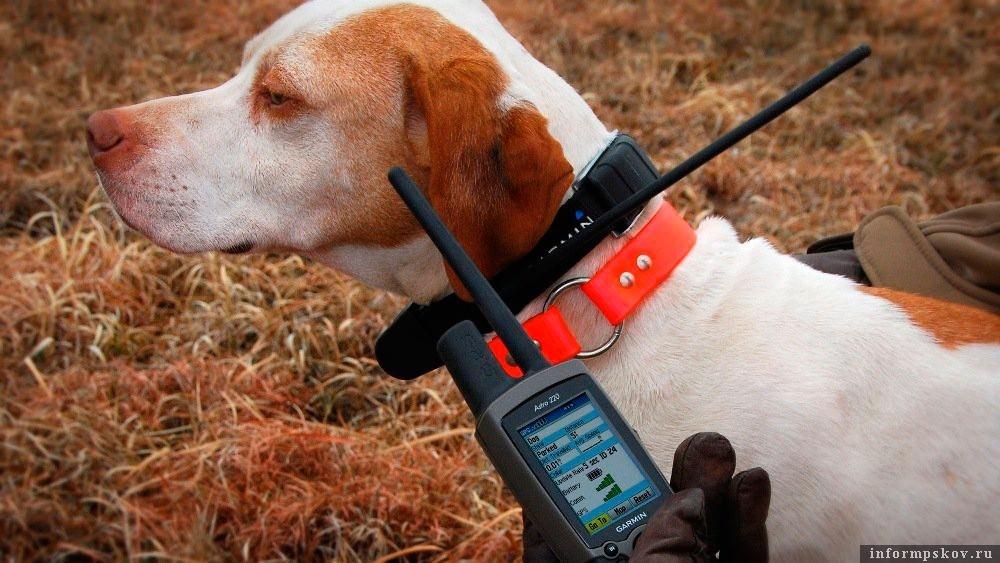 Электроошейник для охотничьих собак
