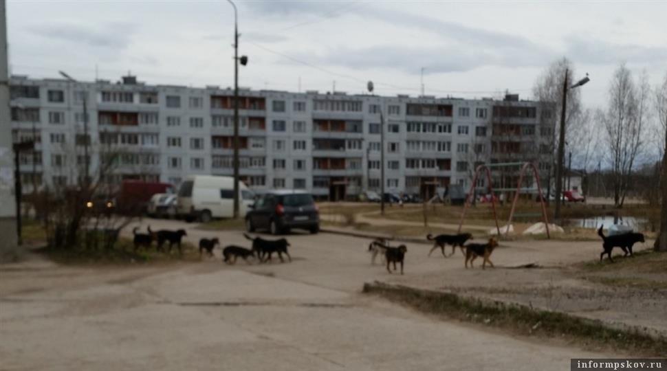 Фото автора обращения на сайте губернатор60.рф
