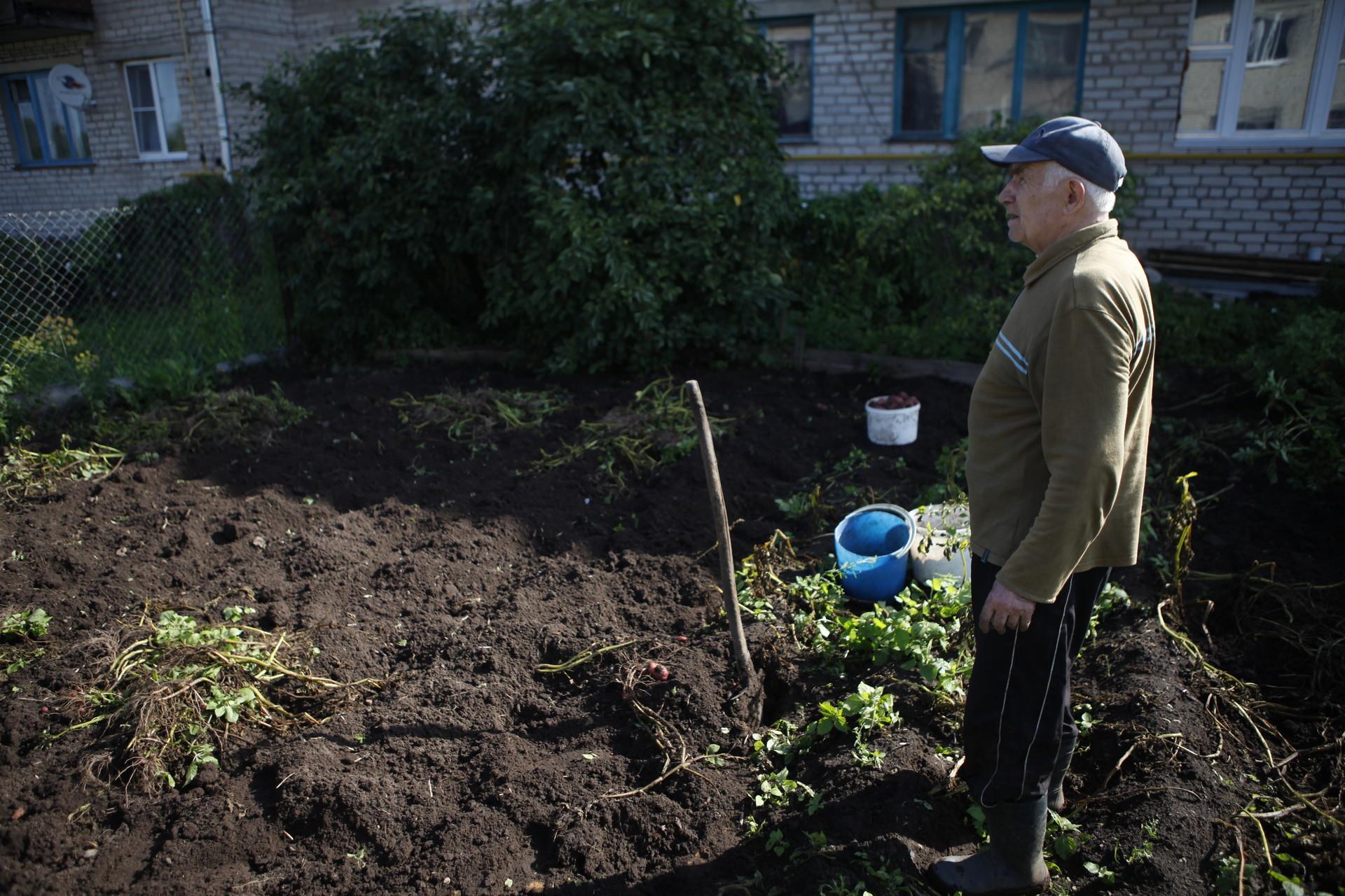Во время ограничительных мер в Псковскую область можно приехать сажать огород, если у вас в собственности оформлена дача. Фото: Андрей Степанов.