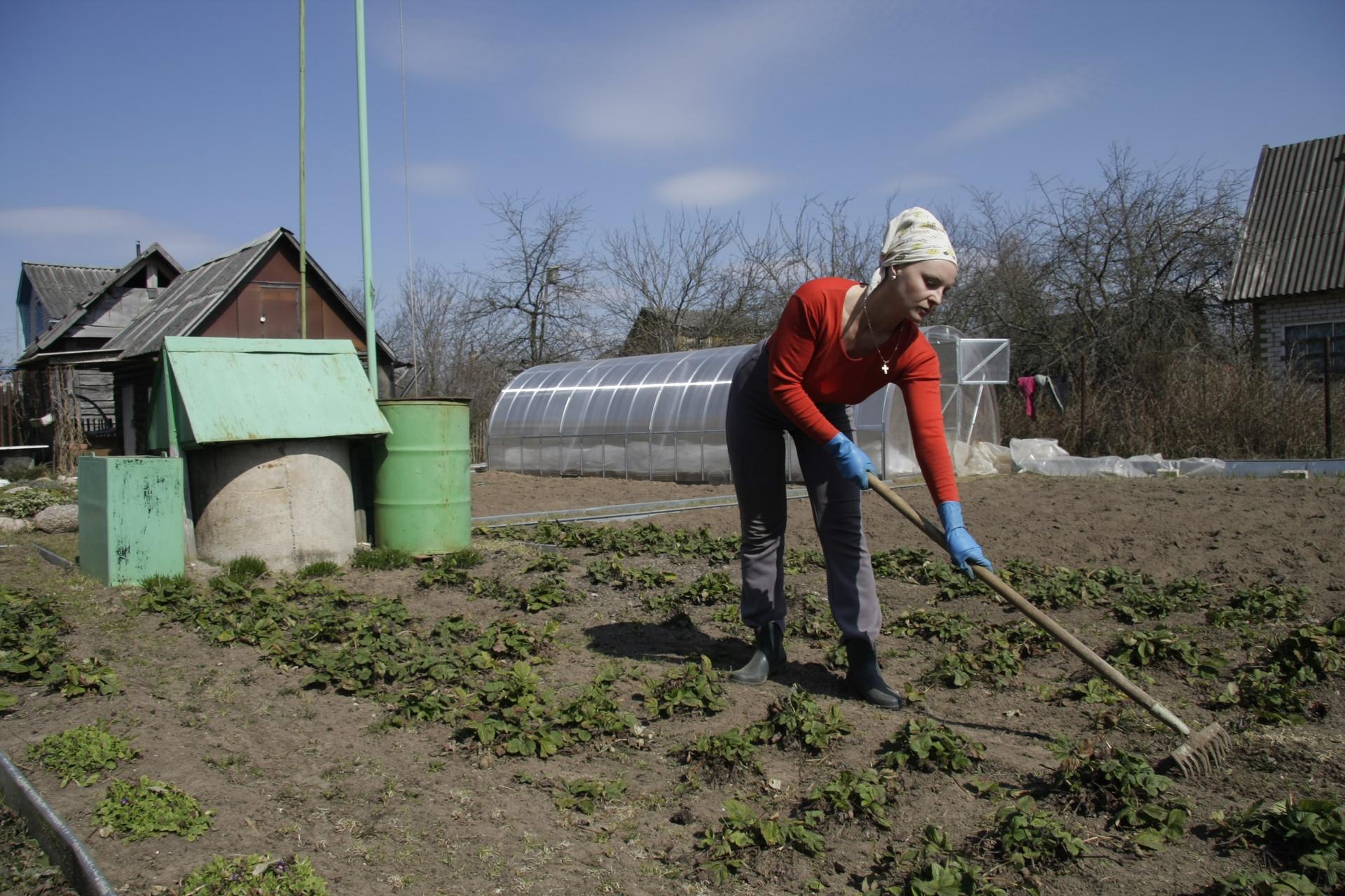 Псковичи могут бесплатно получить участок земли в  СНТ. Фото: Андрей Степанов.