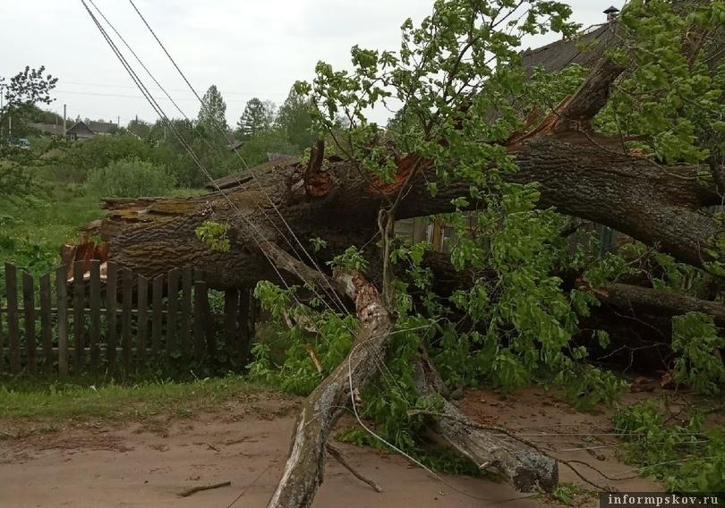 Два дерева повалили сильные порывы ветра в Усвятах. Фото: Валентин Штукин