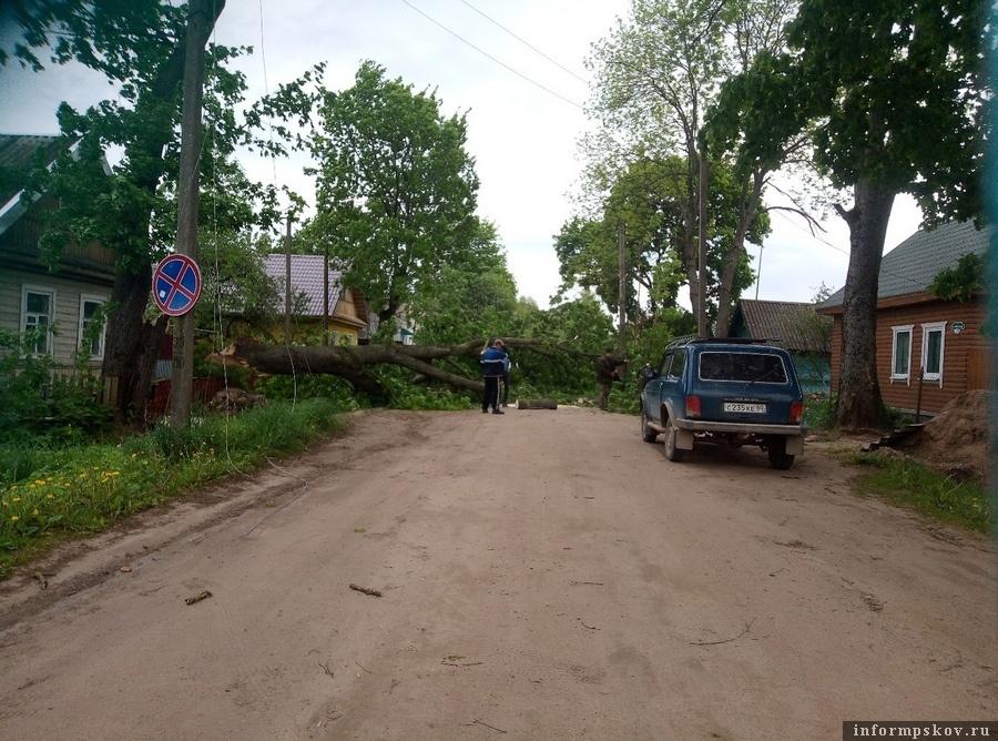 Два дерева повалено в Усвятах. Фото: Алёна Ходченкова
