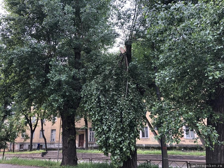 """Фото: газета """"Великолукская правда. Новости""""."""