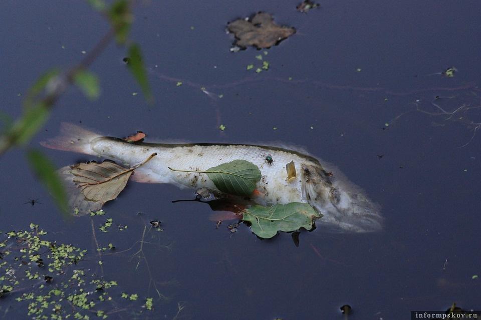 Почему погибла рыба в Гдовском озере, так и не понятно. Фото pixabay.com
