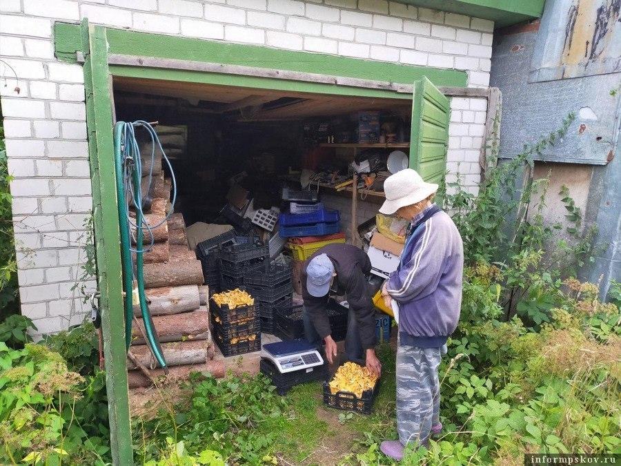 В деревнях собирательство грибов и ягод - основной вид летнего заработка. Фото Никиты Черкашина.