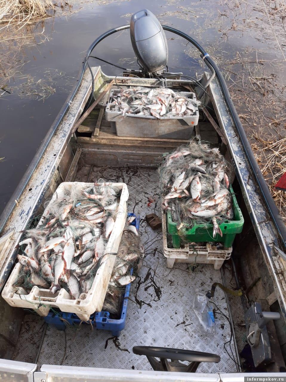 Весна 2020 года, Псковское озеро. Браконьерский улов в браконьерской лодке. Фото автора.