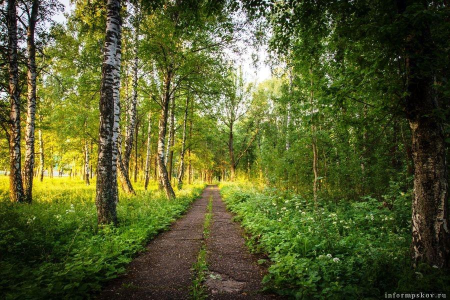 Участники общественных слушаний единогласно одобрили создание лесопаркового зеленого пояса вокруг города Пскова. Фото lookmytrips.com