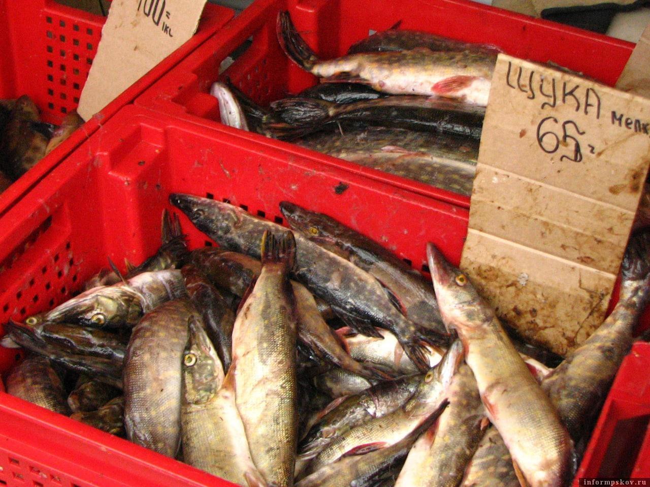 Неужели нас, рыболовов-любителей, услышали? Неужели в 2021 году с прилавков псковских рынков исчезнет щука и судак размером менее 40 см?