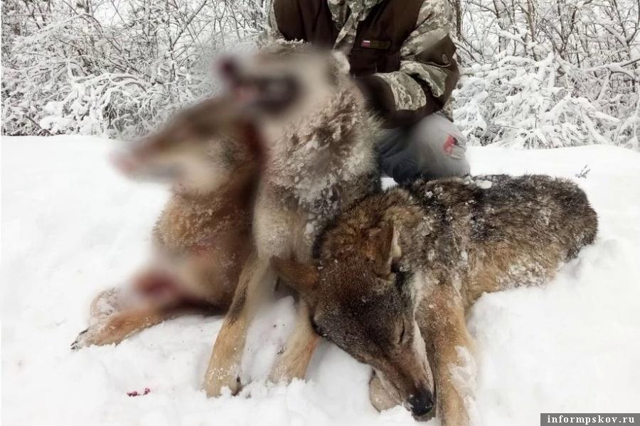 Позирование охотников с убитыми животными возмутило интернет-пользователей. Фото газеты «Заря»