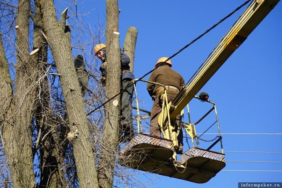 В Новосокольниках будут спиливать ветви деревьев. Фото районной администрации