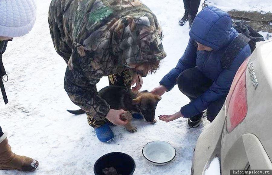 У щенка при осмотре обнаружен чип. Есть информация, что щенок был взят в приюте Подмосковья. Фото зоозащитной организации Шанс
