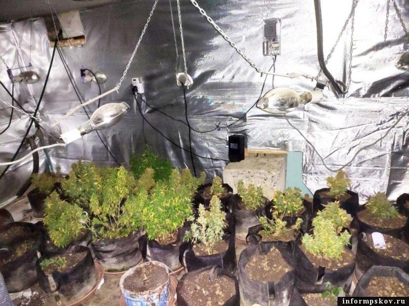 «Карьера» закладчика наркотиков в Псковской области заканчивается за 3-4 месяца