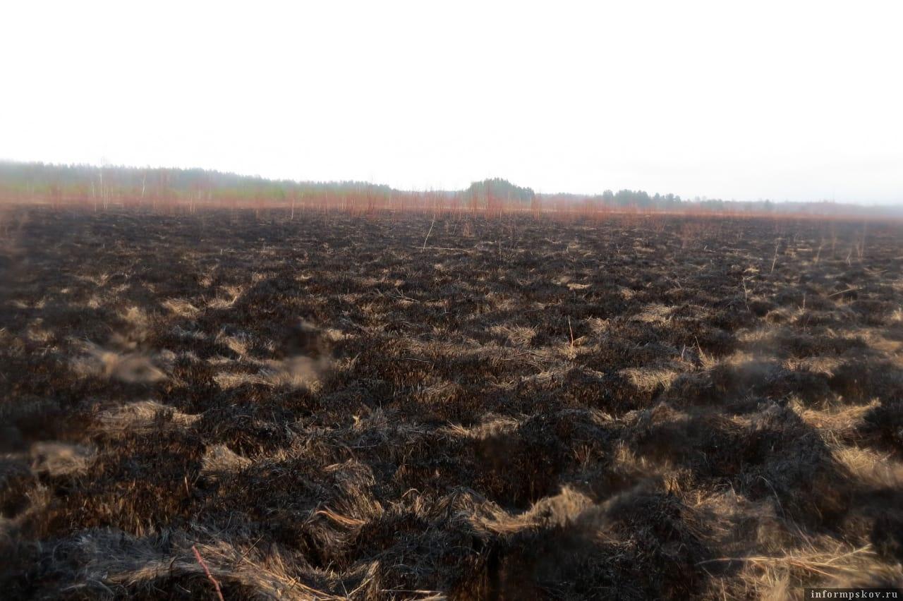 Трава и камыши выжжены на сотнях гектаров по обоим берегам реки Желчи. Не будет теперь здесь ни токов тетеревиных, ни норок с чёрным мехом. В этом году – точно не будет. Фото автора.