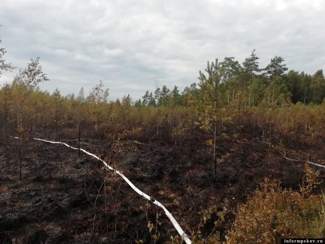 78 лесных пожаров потушили в Псковской области в прошлом году