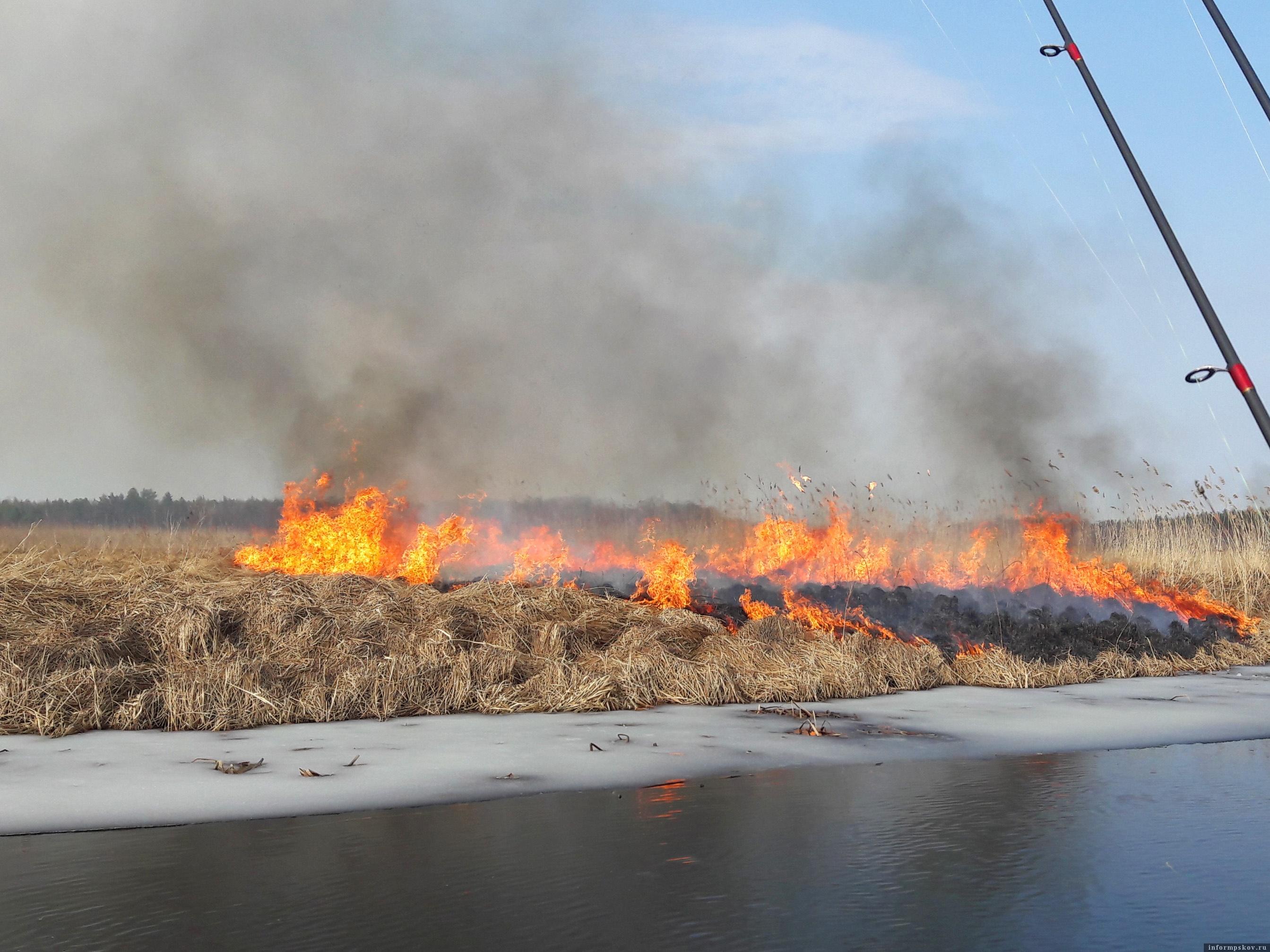 Пожар на берегах реки Желчи 27 марта 2021 года. Фото автора.