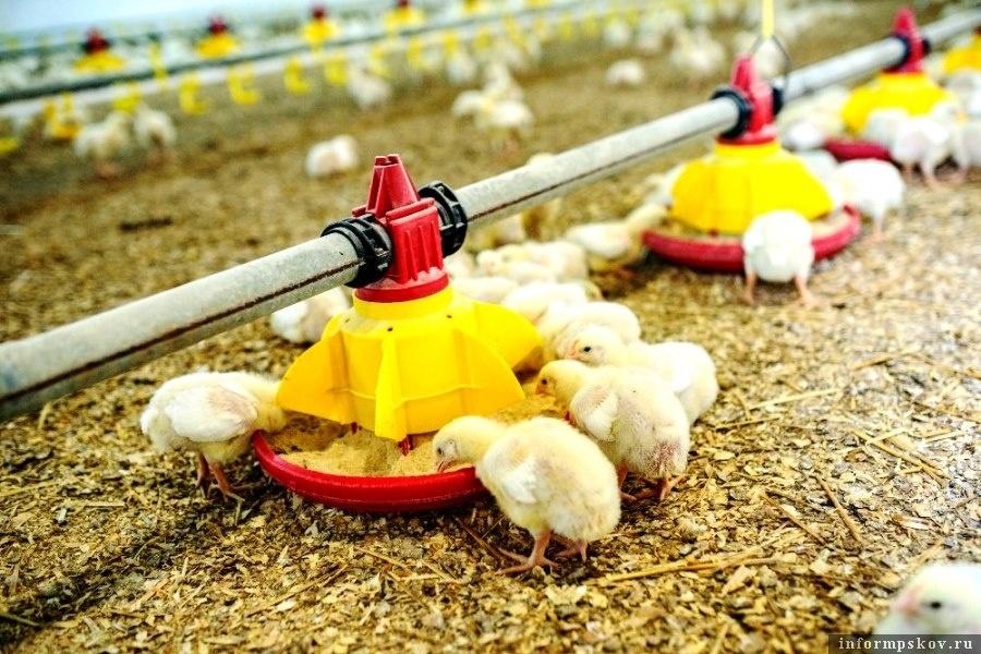 Дополнительные средства выделит Правительство на развитие агро-промышленного комплекса.  Фото latifundist.com
