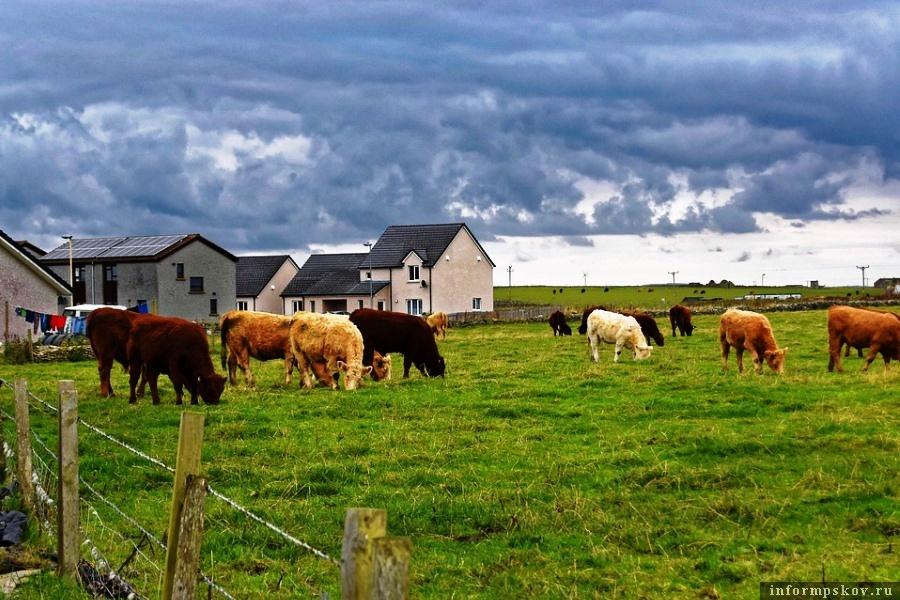 При продаже сельскохояйственных земель есть нюансы. Фото pixabay.com