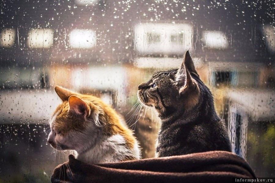 Дожди в Псковской области скоро закончатся. Фото АрбузToday
