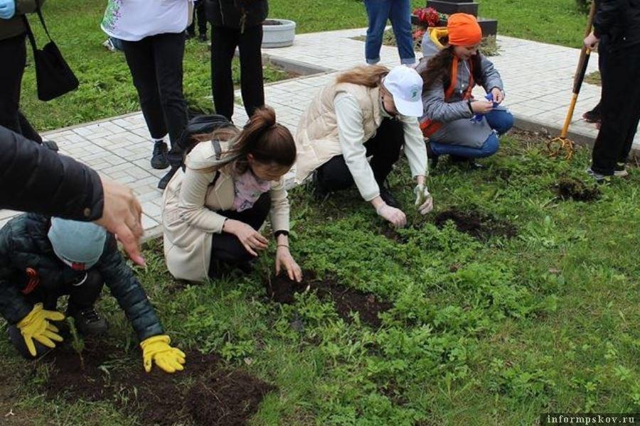 В Псковской области высадили более двух тысяч деревьев. Фото Instagram