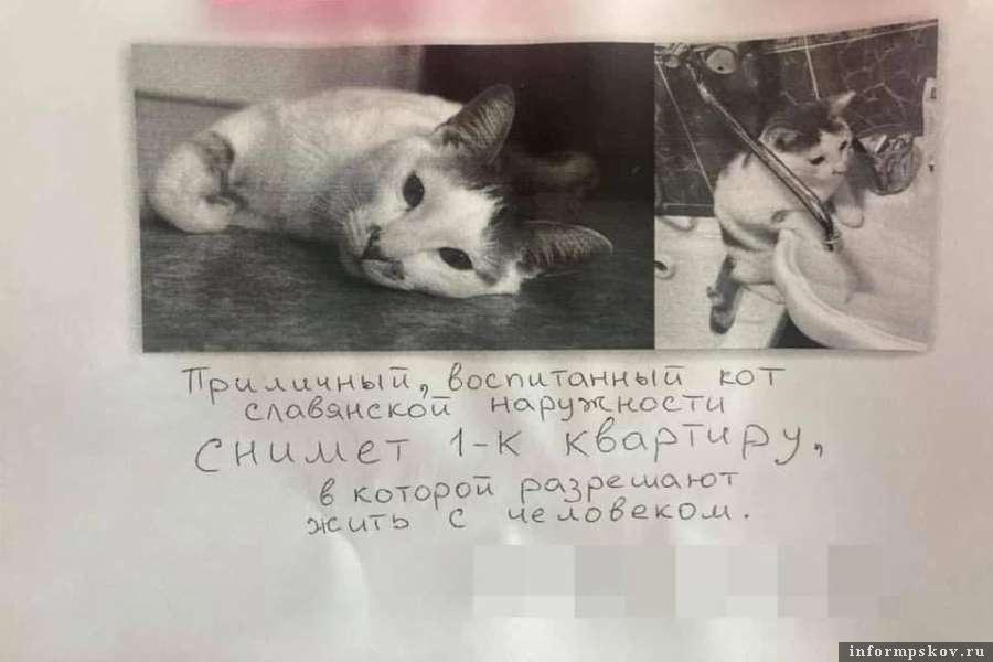 Кот, написав это объявление, заботился и о себе, и о хозяине. Фото КП-Новосибирск