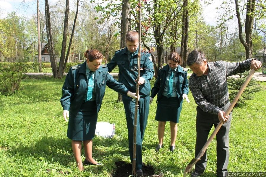 Сажать деревья стало уже доброй традицией. Фото газеты «Наша жизнь»