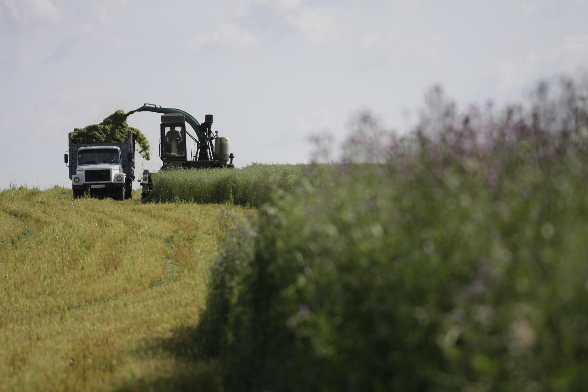 На урожай прогнозы хорошие. Фото Андрея Степанова.