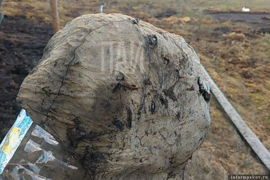 Пыталовские поисковики, нашли в болоте подшлемник лётчика. Фото  Елена Иманаева