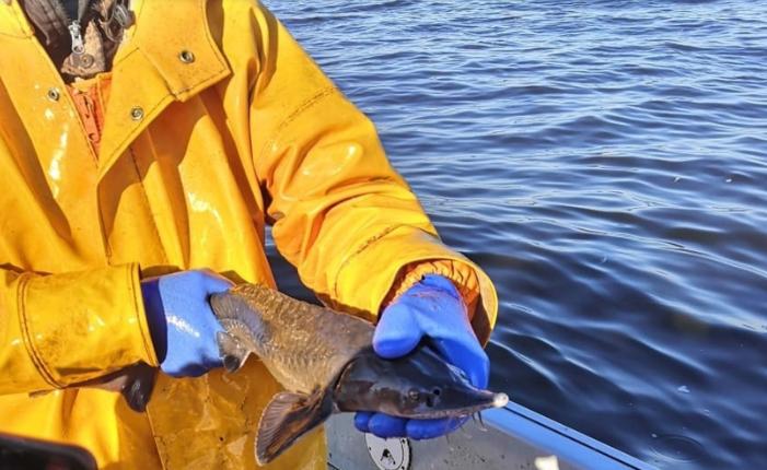Фото: Псковский рыболовный форум