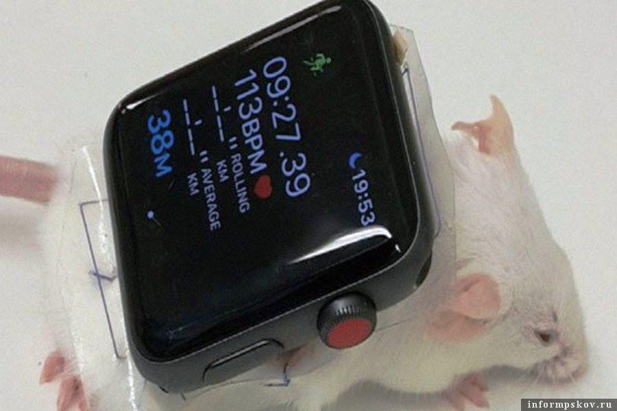 Лабораторная мышь с «умными» часами на спине. Фото Nature Communcations