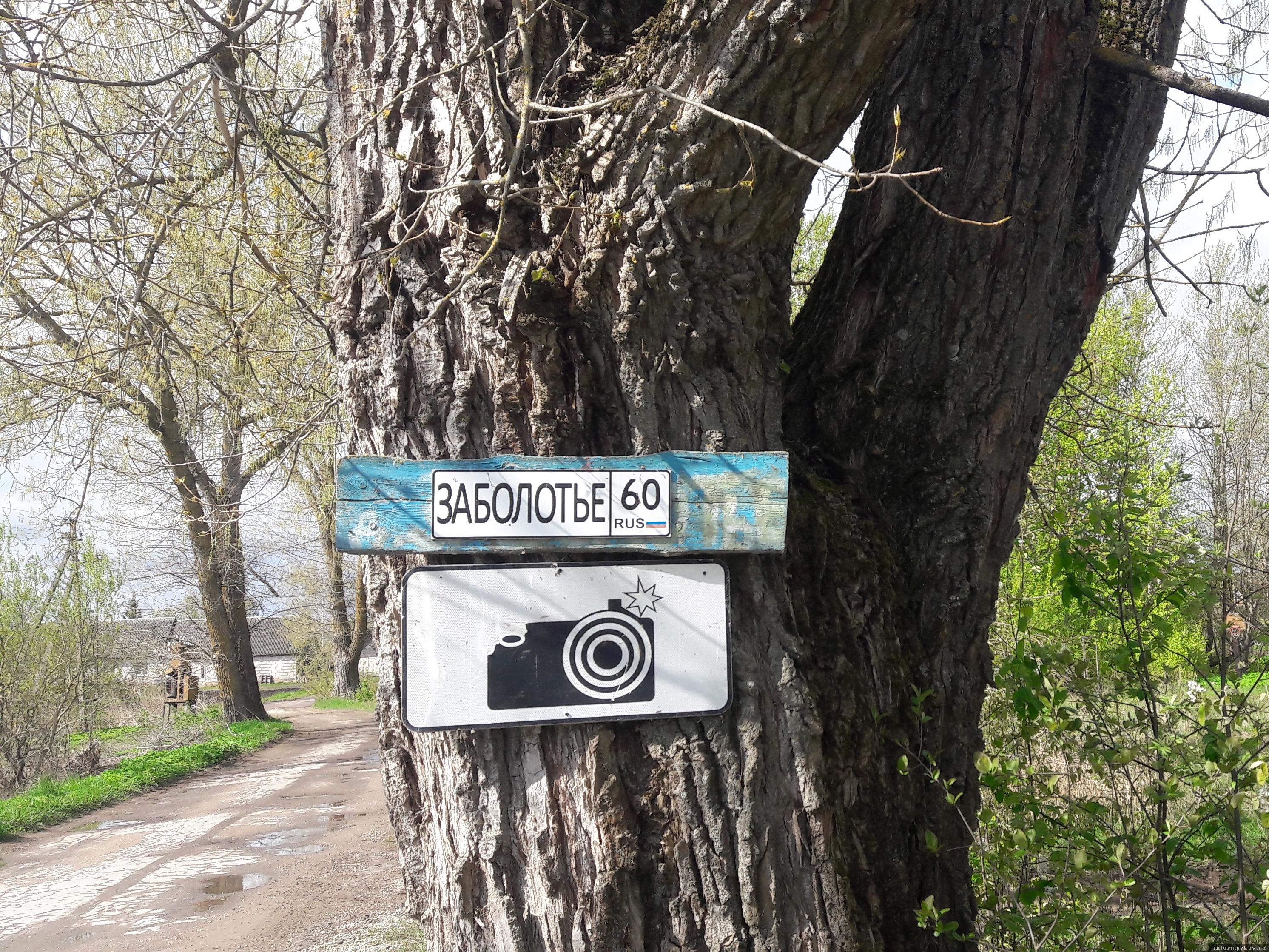 Деревня Заболотье. Добро пожаловать в карасиное царство. Фото автора.
