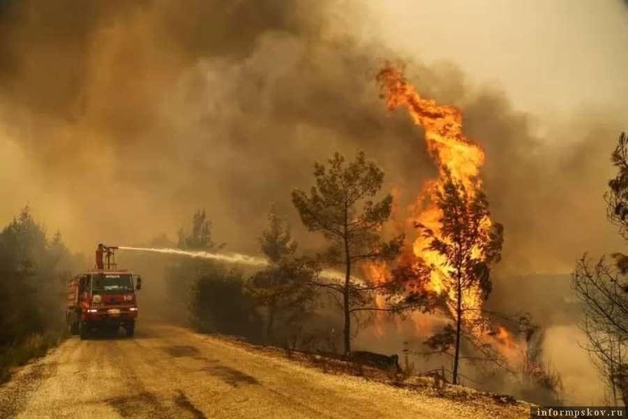 Огонь подошёл близко к жилым кварталам. Фото Telegram