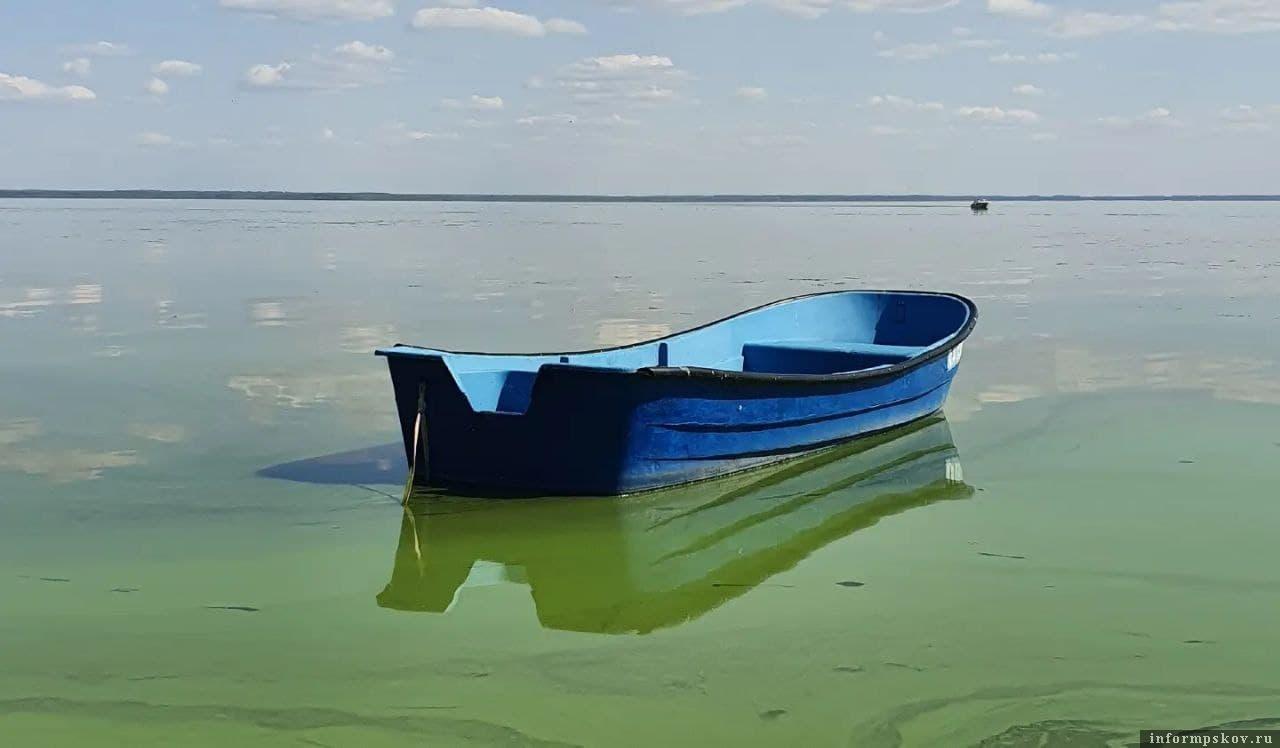 Остров Белов в Псковской области. На Псковском и Чудском озере вода стала бирюзовой. Фото Ирины Назаровой.