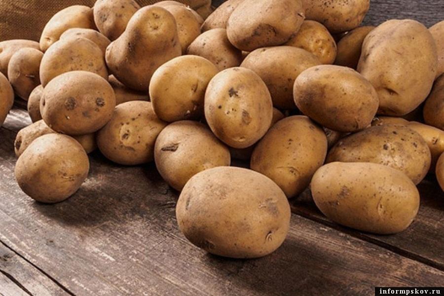 40% псковского картофеля выращивают в Печорском районе