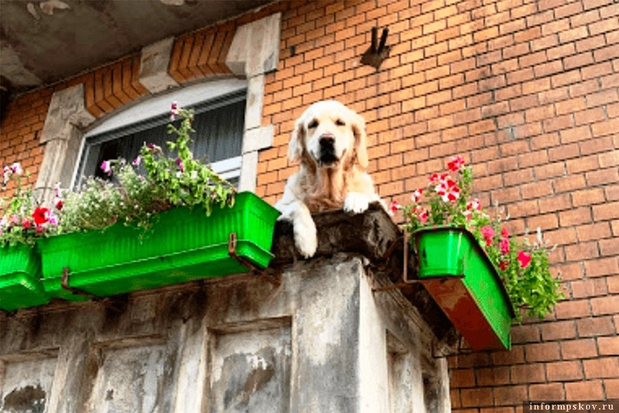 «Милый пёс на балконе» стал одной из главных достопримечательностей мира. Фото Google Maps