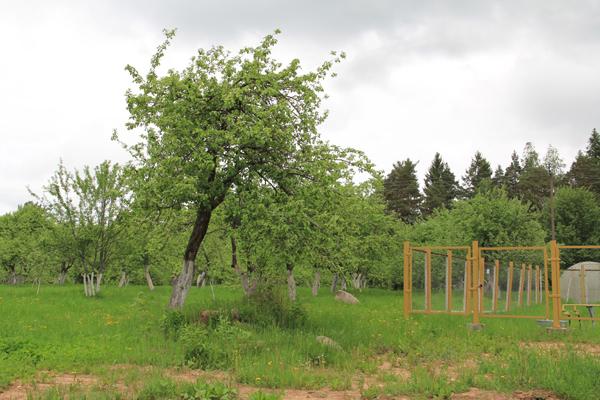 Яблоневый сад князя Гагарина в Холомках.