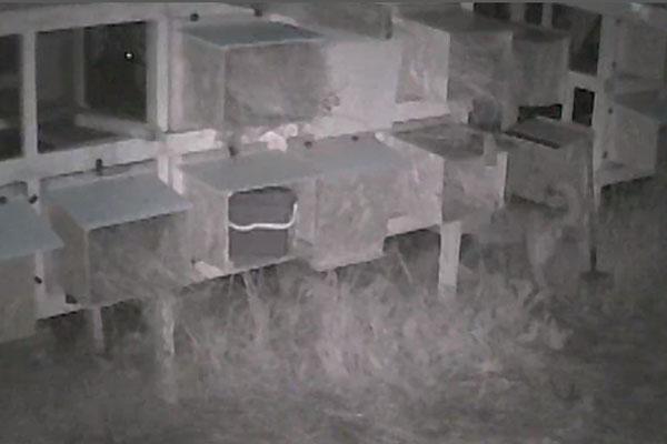 На фото: стоп-кадр из видеозаписи