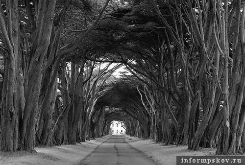 На фото: дремучий лес