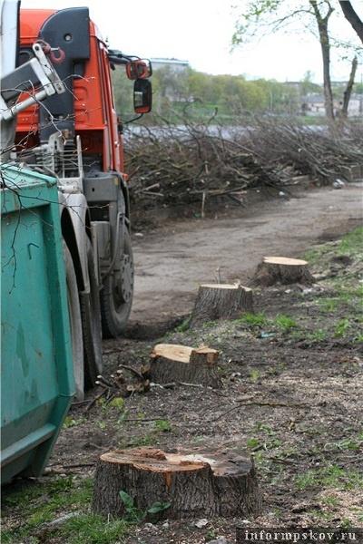 На фото: спиленные деревья на набережной