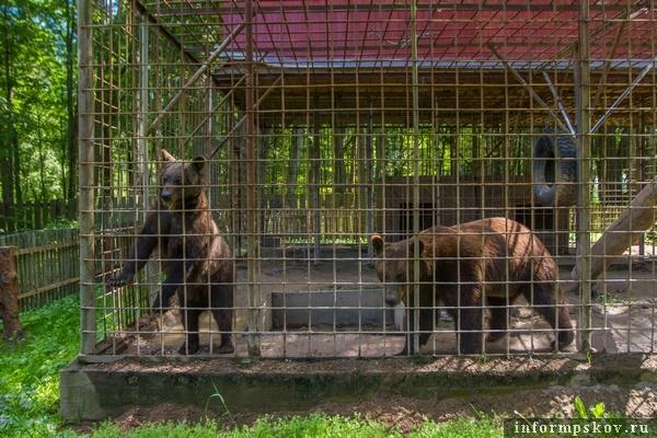 На фото: обитатели Медвежьего угла