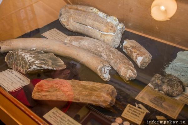 На фото: части мамонта, найденные археологами в Себежском районе