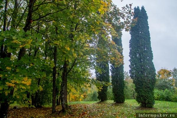 На фото: усадебный парк