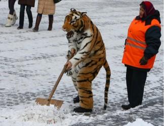 """""""ПсковЖилСервис"""" знает, сколько надо платить дворникам, чтобы они убирали снег на совесть"""